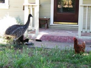 chick-n-emu 4
