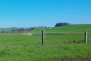 Green Hills for Grazing