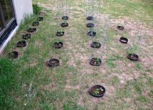 Another Bucket Garden
