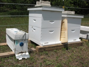 Bee transport next to new home.